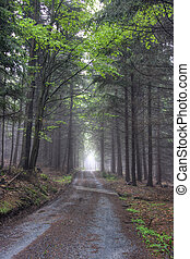 strada, in, nebbioso, conifero, foresta