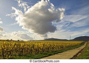 strada, in, wineyards