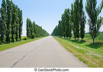 strada, orizzonte, albero