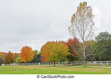 strada paese, in, maryland, in, autunno