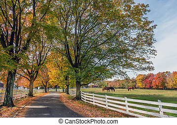 strada paese, in, rurale, maryland, durante, autunno
