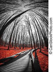 strada, rosso, forest.