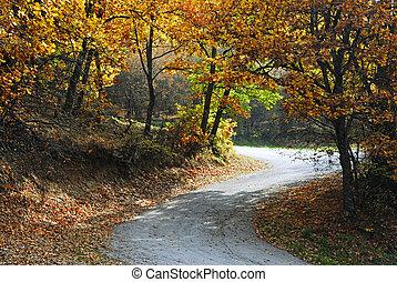 strada, su, il, foresta