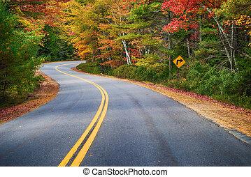 strada winding, attraverso, alberi autunno, in, nuova...