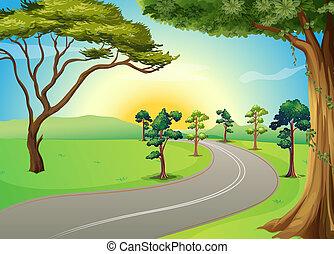 strada winding, lungo, foresta