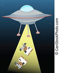 strahlend, ufo, auf, zwei, balken, kühe