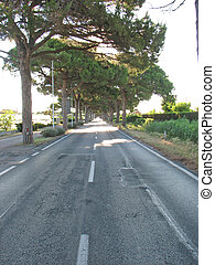 straight asphalt road with pine trees on the sides