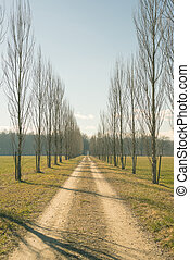 Straight dirt road with row of trees