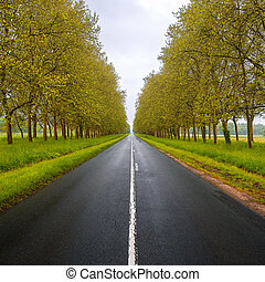 Straight empty wet road between green trees. Loire valley. France.