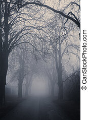 Straight foggy passage surrounded by dark trees in late ...