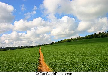 Straight footpath - Lonely footpath through a crop field