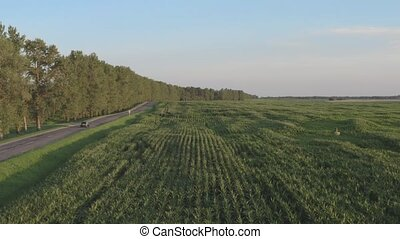 Straight road in agriculture side. Aerial view of grey car...