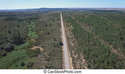 Flying over straight road in the countryside with pine trees