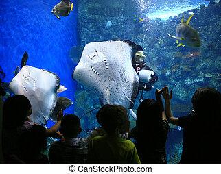 stralen, in, een, reus, aquarium, met, kinderen, schouwend