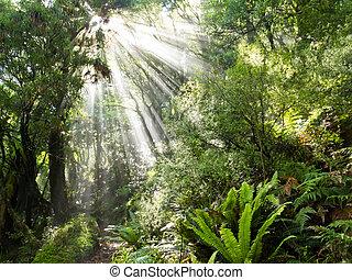 stralen, van, zonlicht, balk, trog, dicht, tropische , jungle