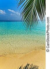strand, aardig