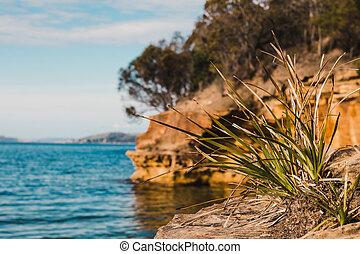 strand, conningham, tasmanië, aanzicht, zijn, kust, beauty, australië, pristine, ruw