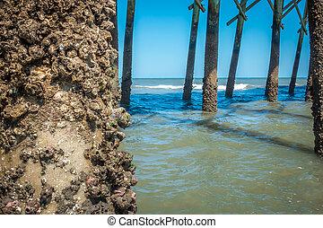 strand, dårskap, charleston, pir, södra carolina