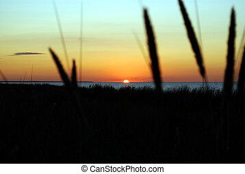 strand gras, vor, sonnenuntergang, aus, der, ostsee