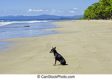 strand, hund