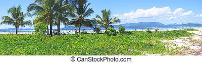 strand, madagascar, eiland, zijn, nieuwsgierig, panoramique, iranja, gras