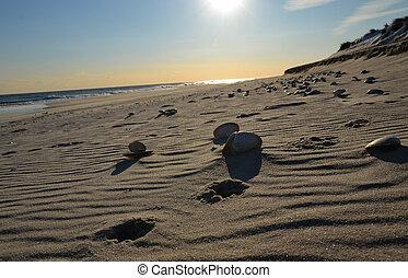 strand, med,  sand, någon, solnedgång, skalen