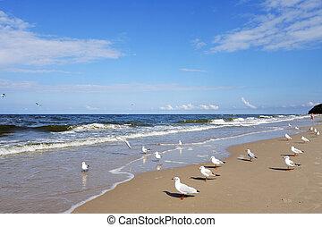strand, met, gulls