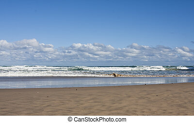 strand, og, bølger, hos, skyer, og blå, himmel, solfyldt dag