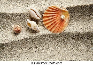 strand sandpappra, pärla, mussla skal, sommar ferier