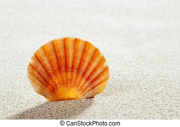 strand sandpappra, skal, tropisk, perfekt, sommar ferier