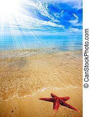 strand, sjöstjärna