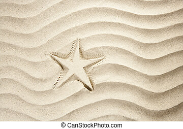 strand, sjöstjärna, tryck, vit, karibisk, sand, sommar