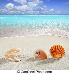 strand, sommar ferier, bakgrund, skal, pärla, mussla
