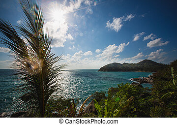 strand., sonnenuntergang, aus, tropische