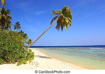 strand, verbazend, palmbomen