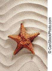 strand, vit, vågig, sand, sjöstjärna, sommar ferier