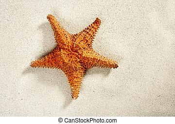 strand, vita sandpappra, sjöstjärna, sommar ferier, symbol