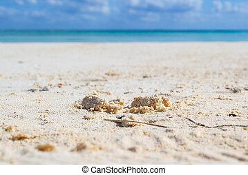 strand., zand, witte , tropische , detail, boete