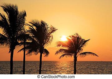 strand, zonopkomst, achter, palmbomen