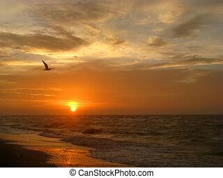strand, zonopkomst