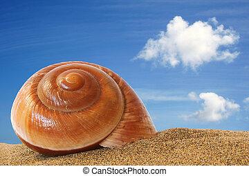 stranddal rendelkező, kagyló