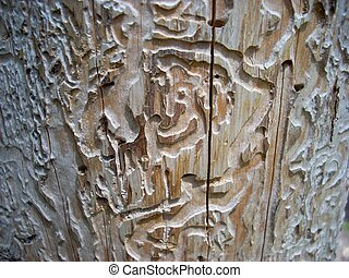Strange bark's texture