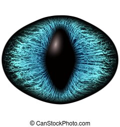Strange blue eye of feline animal with colored iris. Detail view into isolated predator eye bulb