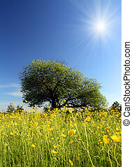 strange tree and buttercups