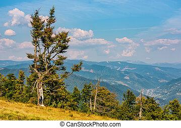 strange tree on a hillside - beautiful autumnal scenery with...