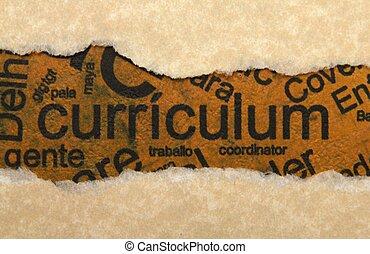strappato, curriculum, carta