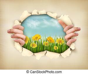strappato, erba, illustration., natura, paper., vettore,...