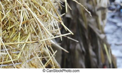 straw bale - close-up bale of straw at the wind