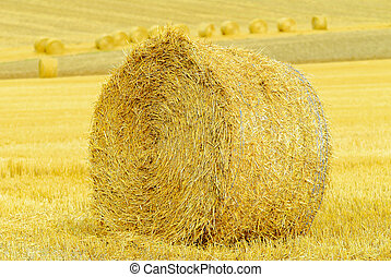 straw bale in a harvested field