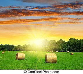 straw bale in a lush green field